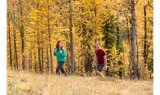Trail Of The Larches Guided Hike